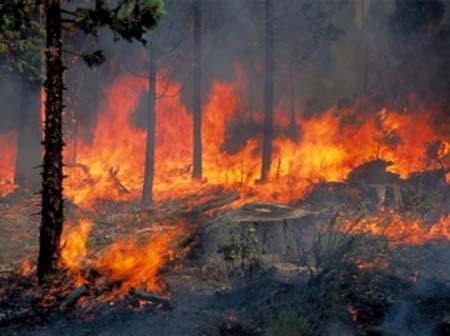 Πυρκαγιά στον Έβρο
